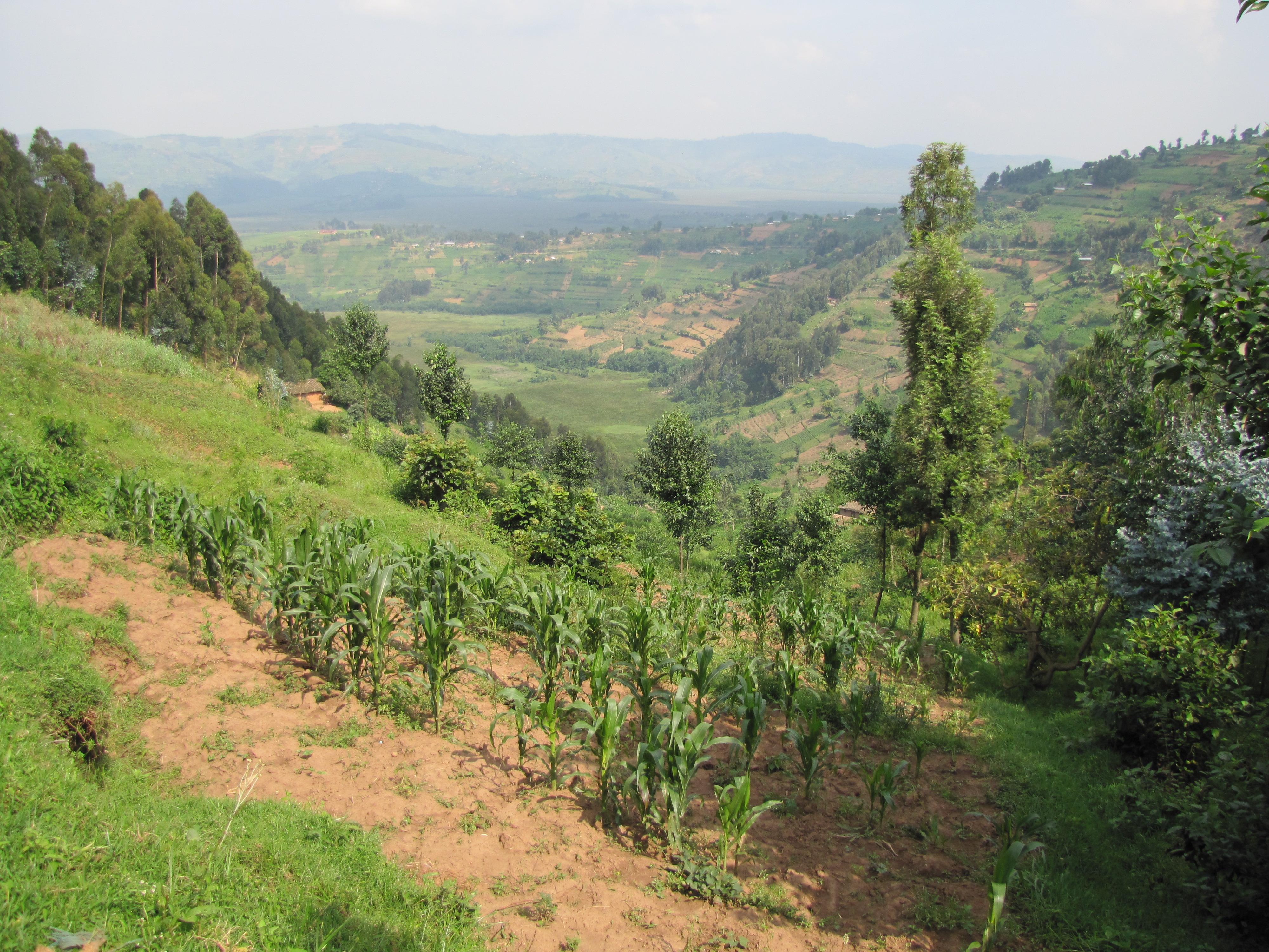 Rwanda  26.12.2013 - 17.1.2014 735